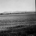 Lochkamera- / Pinhole-Photographie